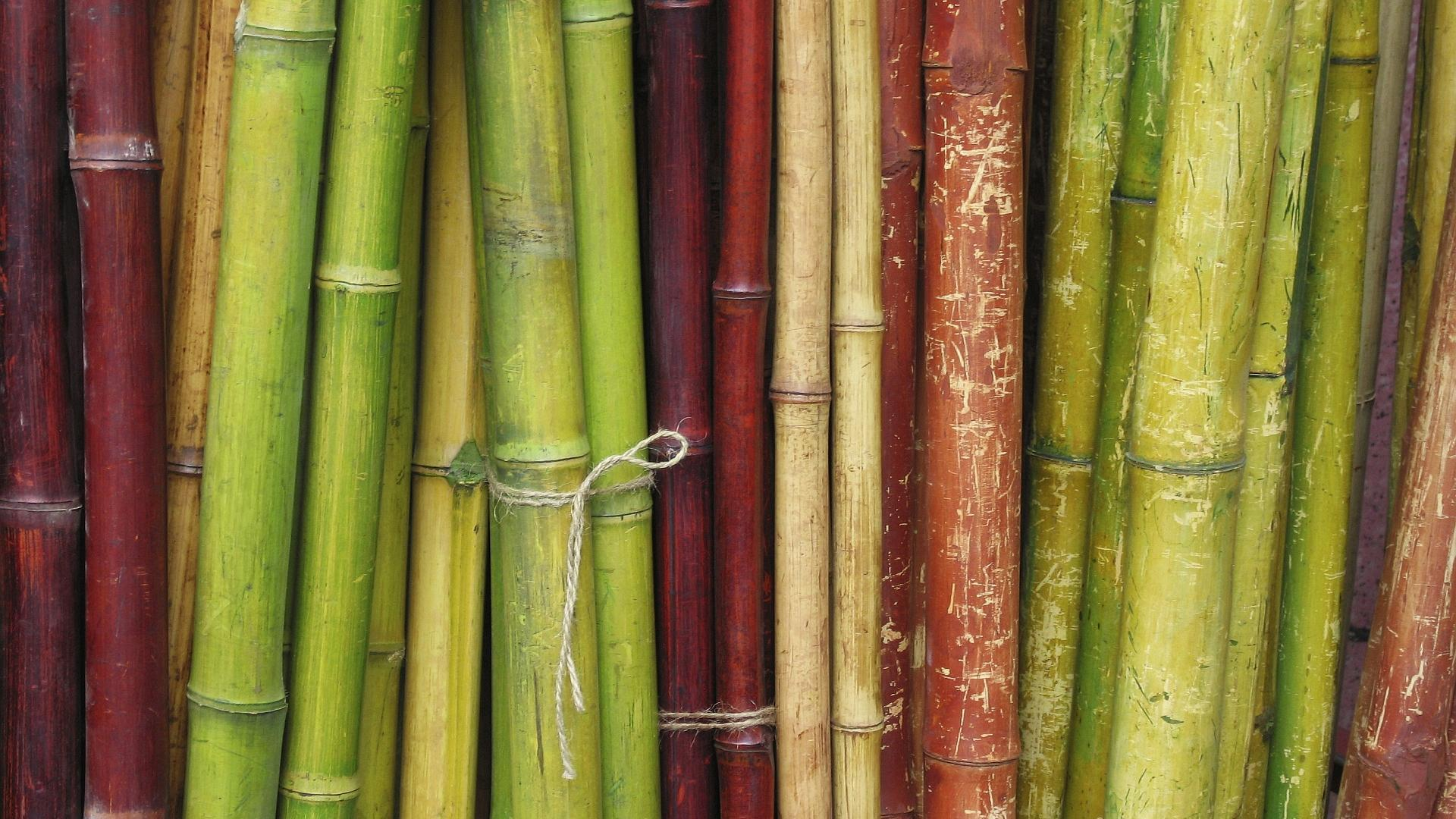 Bamboo wallpapers best wallpapers for Bamboo wallpaper for walls
