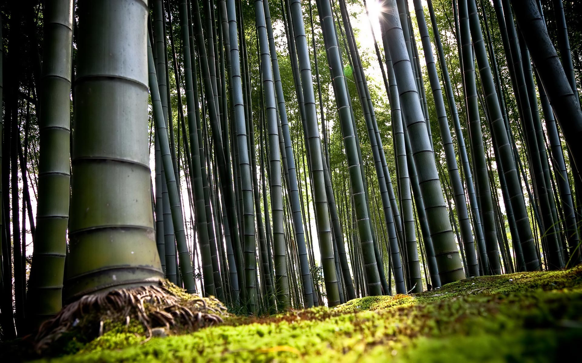 bamboo wallpapers best wallpapers