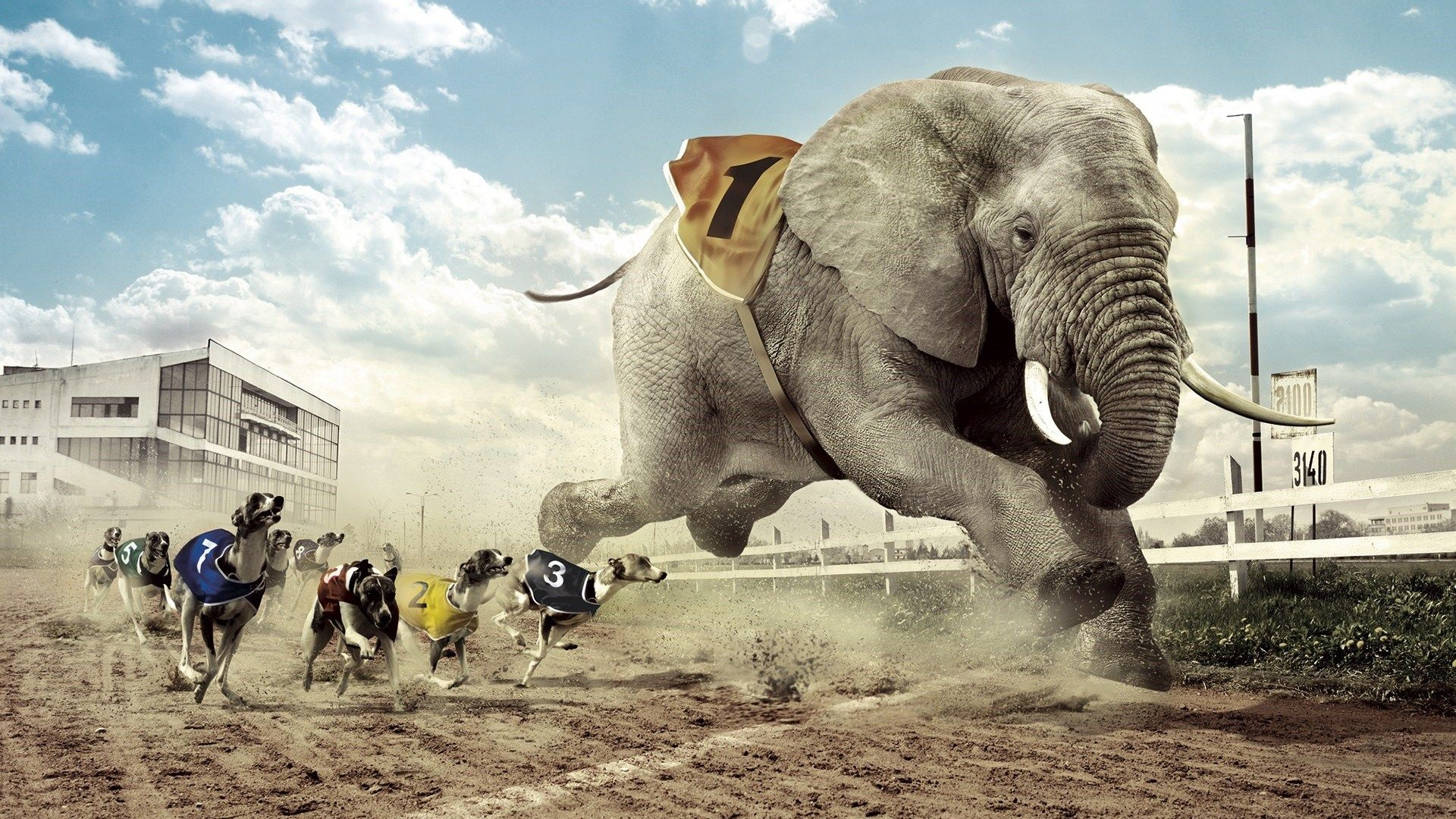 Elephant Wallpapers Best Wallpapers