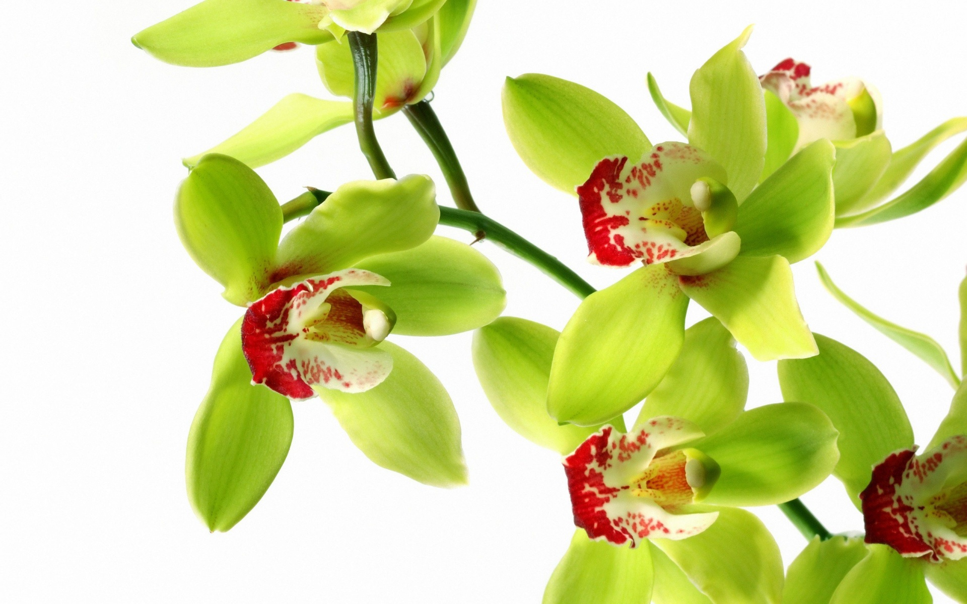 orchid wallpapers backgrounds images - photo #30