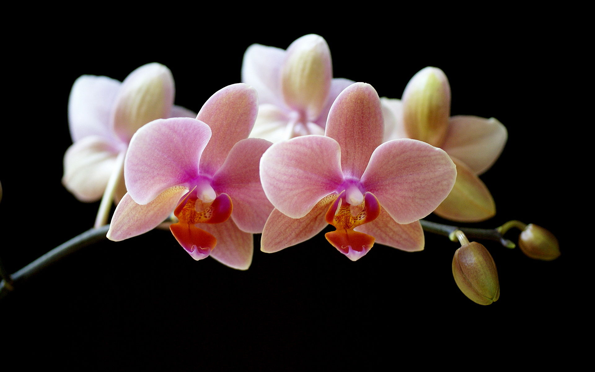 orchids wallpapers best - photo #3