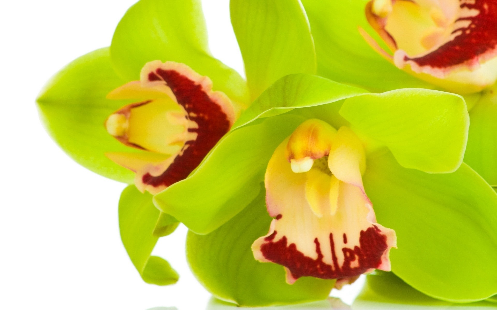orchids wallpapers best - photo #15