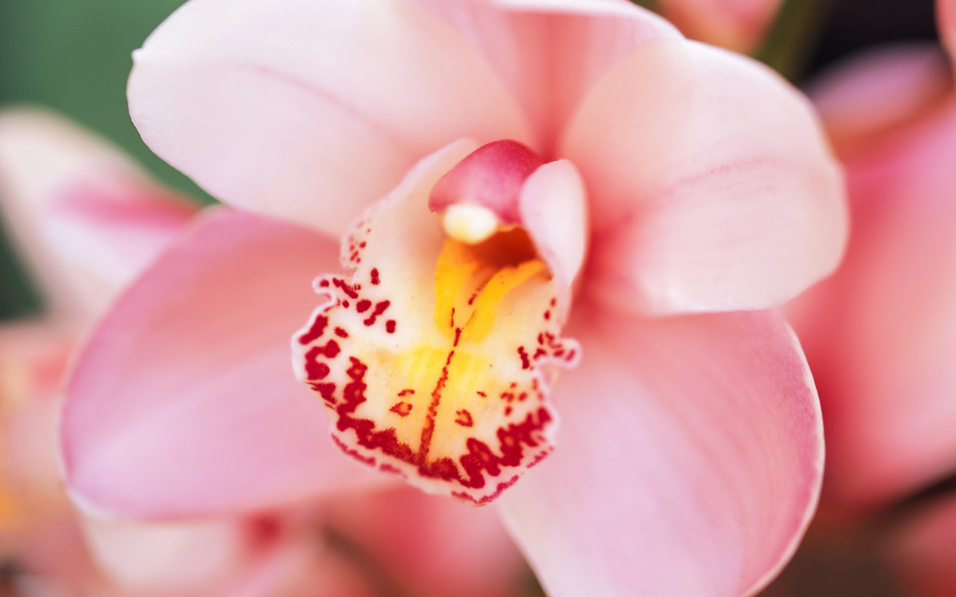 orchids wallpapers best - photo #9