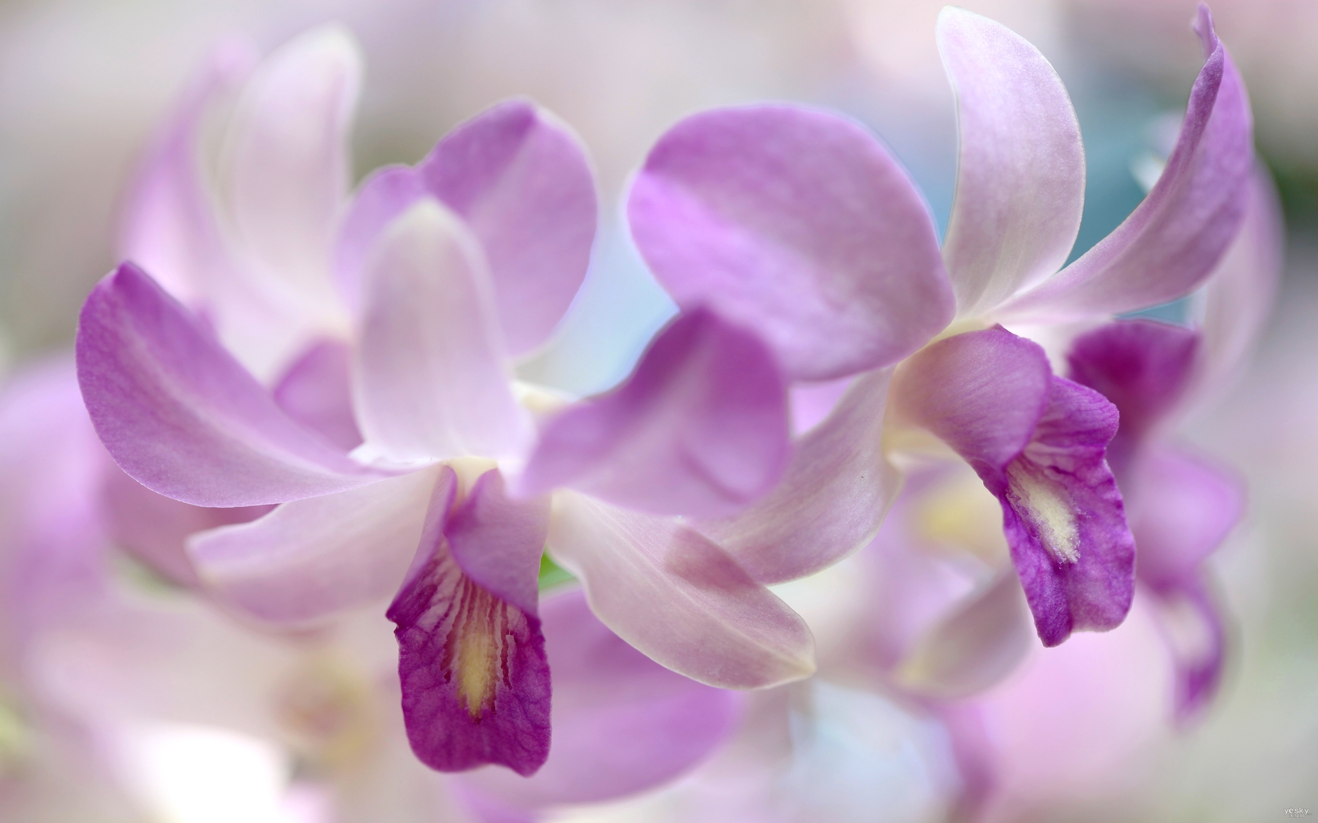 orchids wallpapers best - photo #24