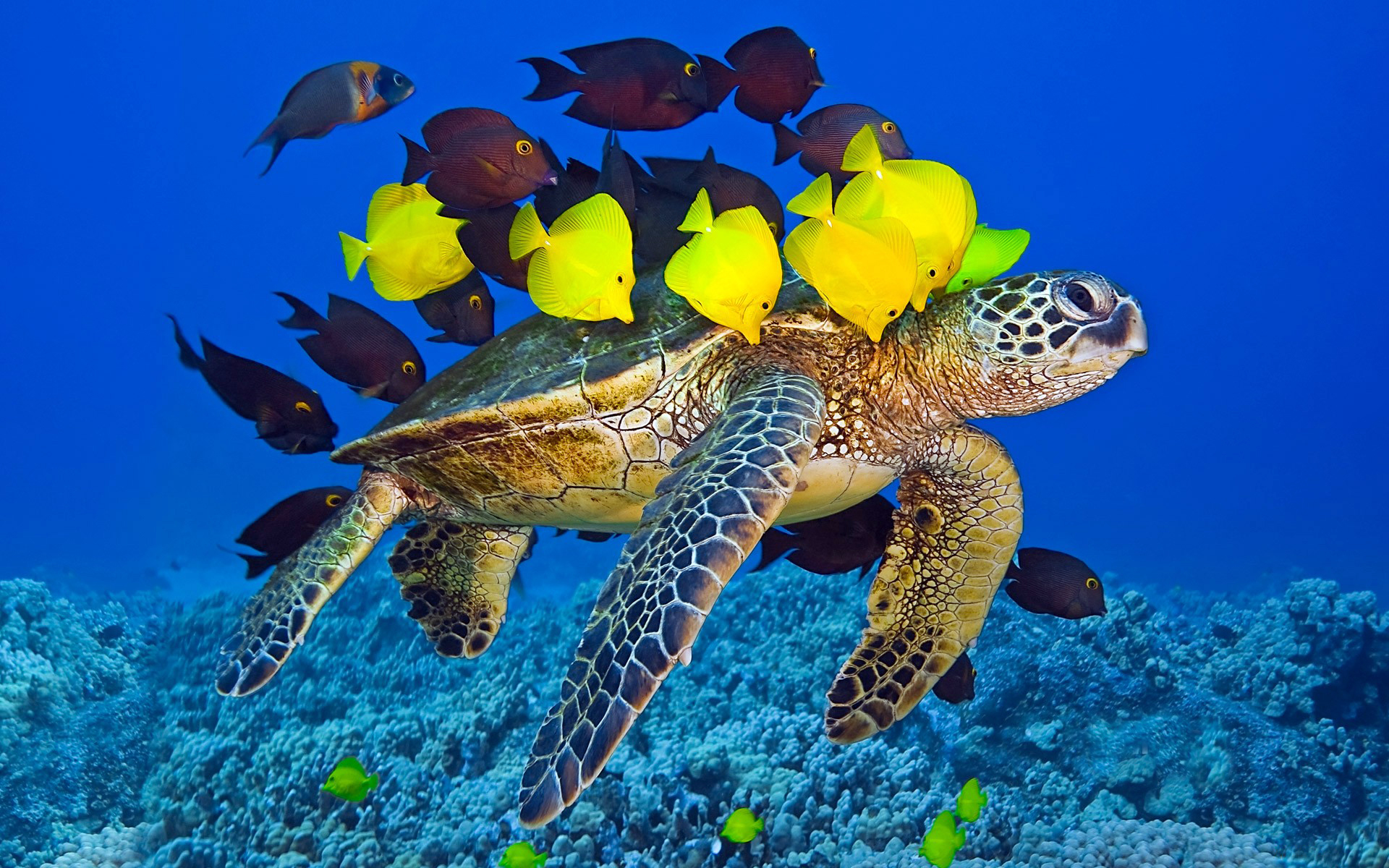 Turtle Wallpapers Best Wallpapers