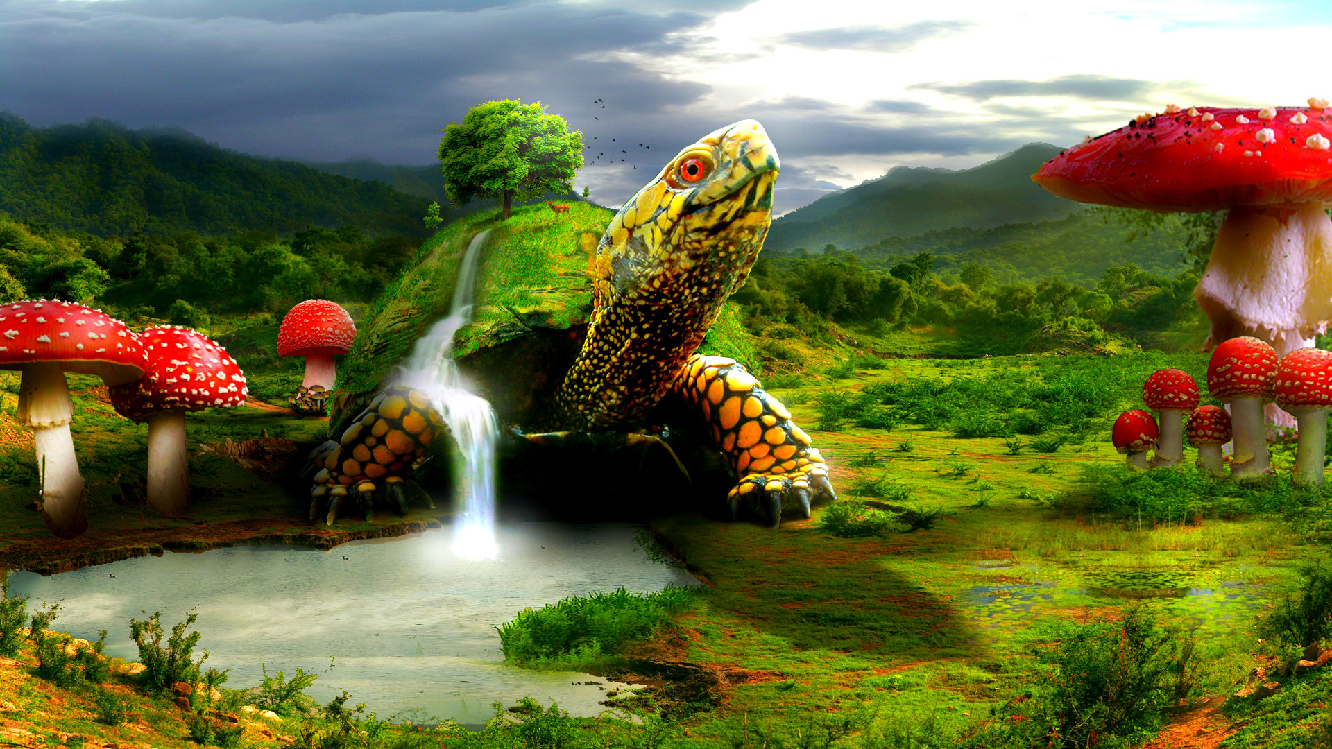 Turtle Wallpapers | Best Wallpapers