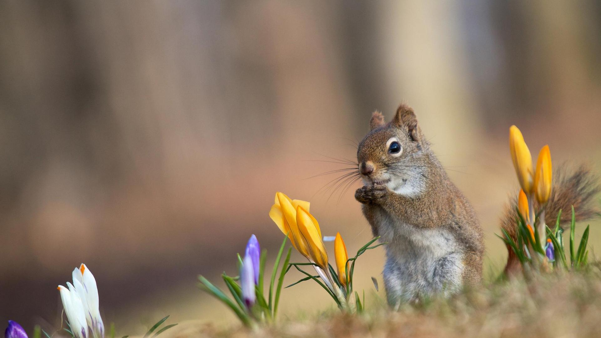 squirrel wallpaper - photo #42