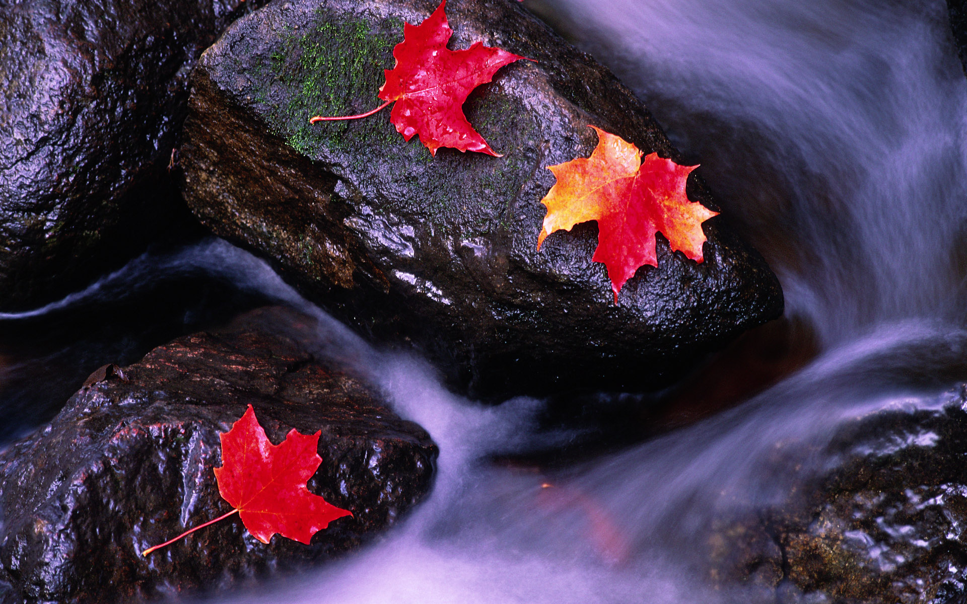 Canada wallpapers best wallpapers for 3d wallpaper canada