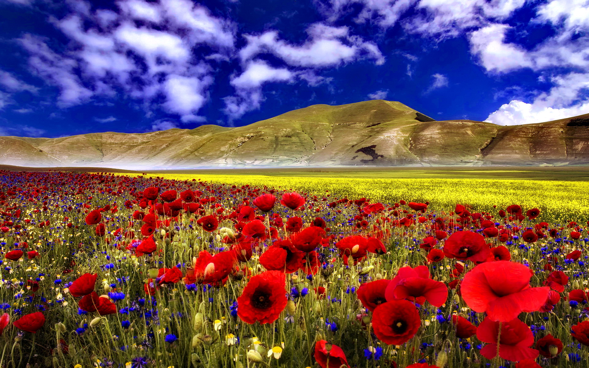 Images Of Hd Flower Field Wallpaper Spacehero