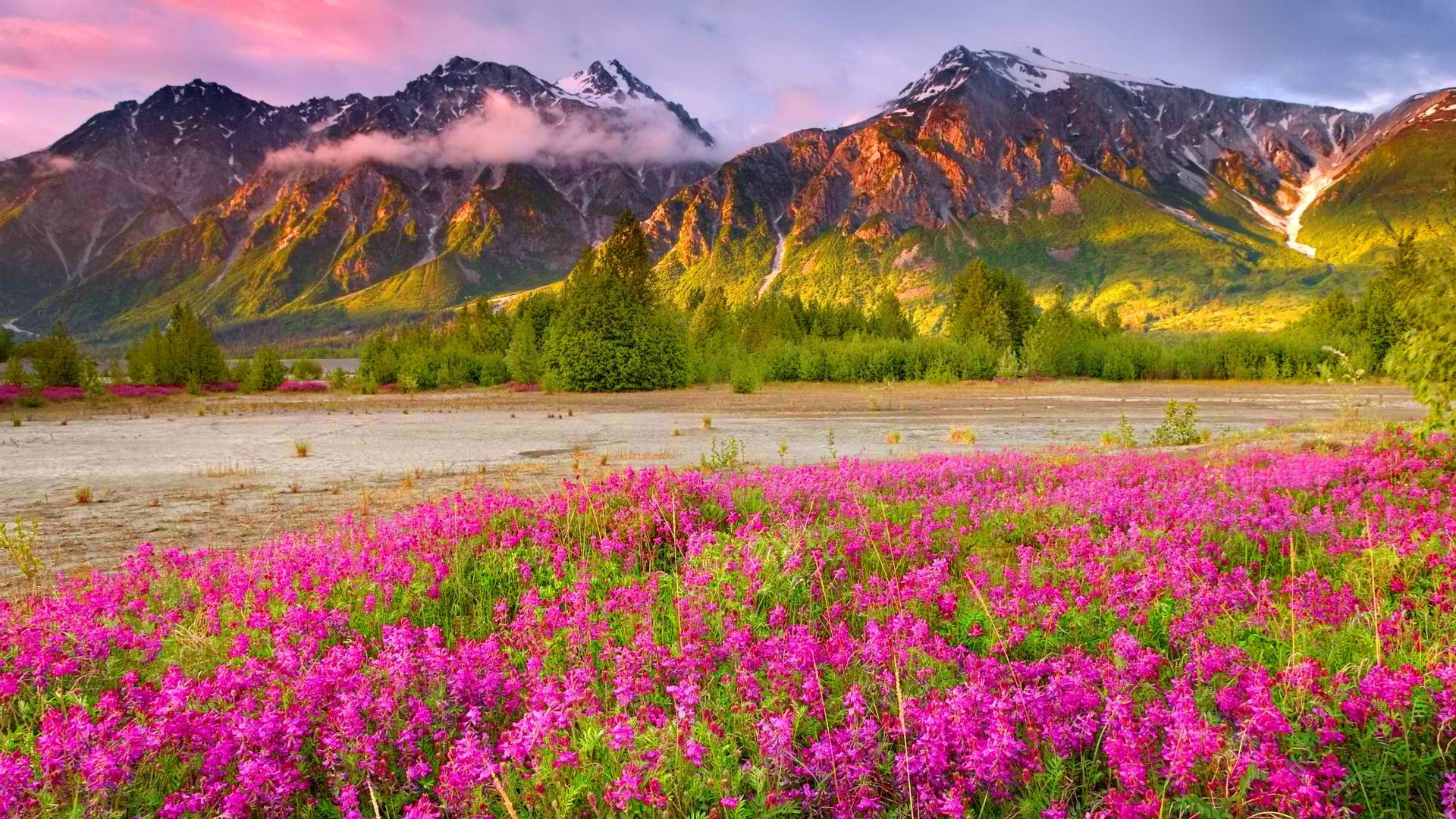 wildflower wallpapers best wallpapers