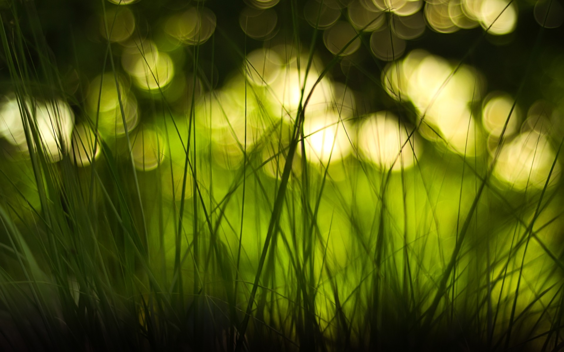 Bokeh Wallpapers | Best Wallpapers