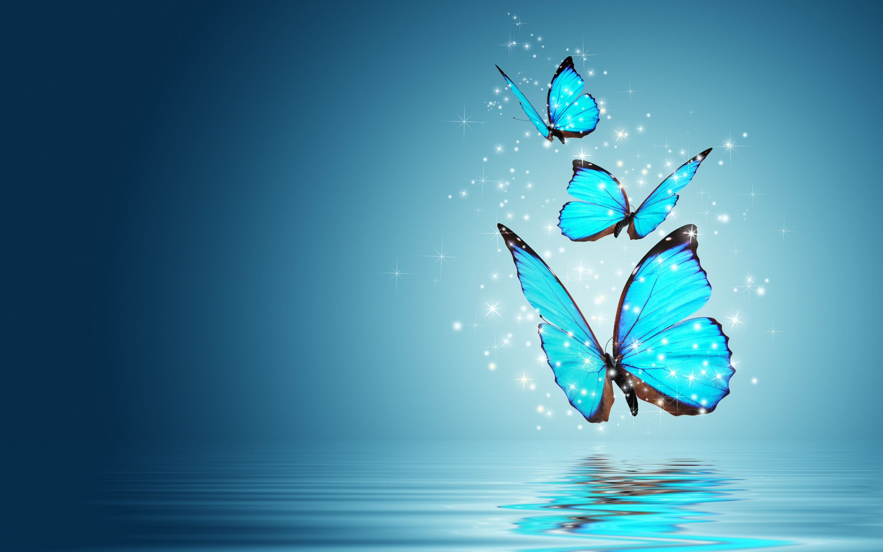 Butterfly Wallpaper Butterfly HQ Wallpaper