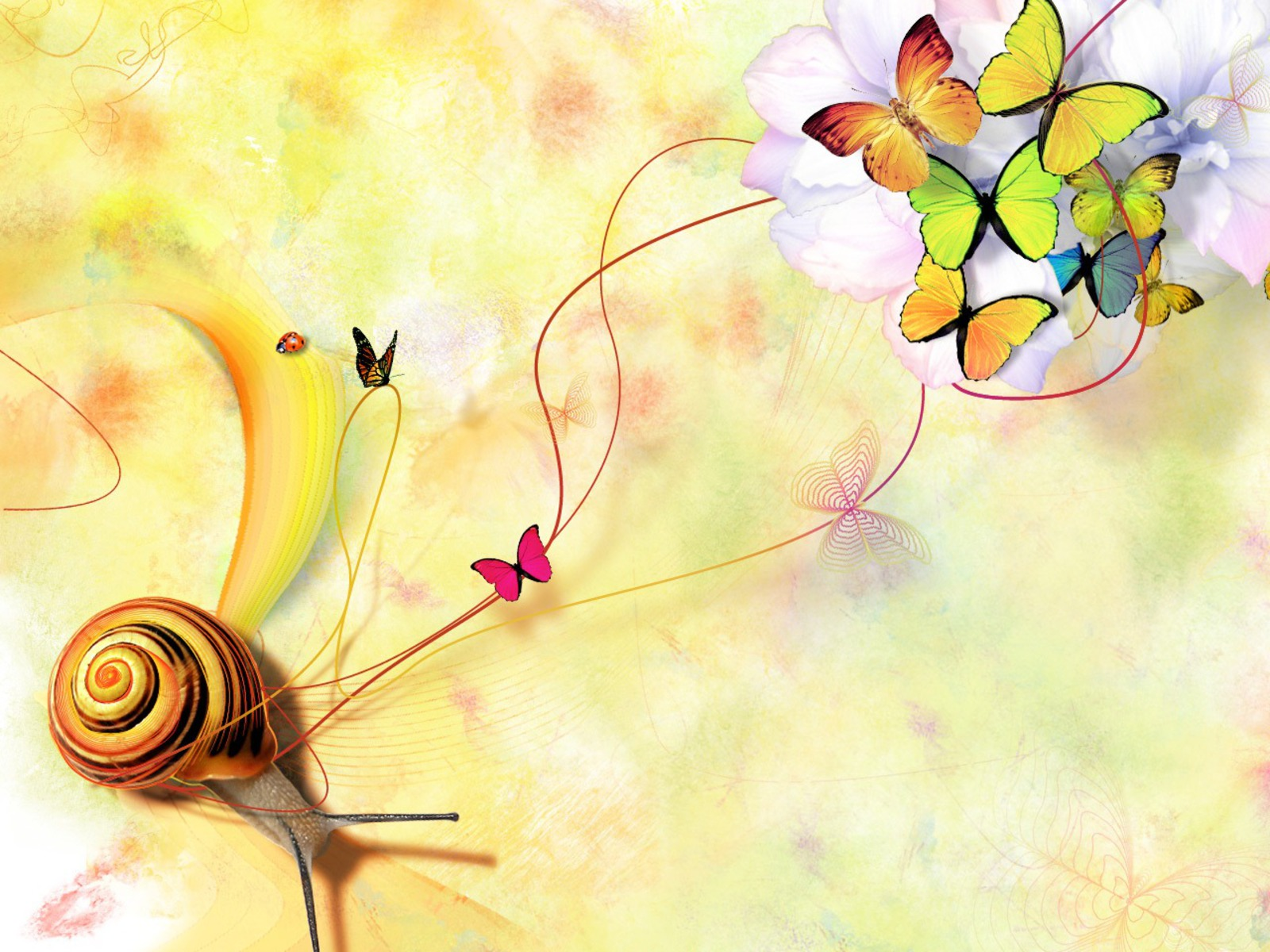 butterfly wallpapers best wallpapers On butterfly wallpaper for walls
