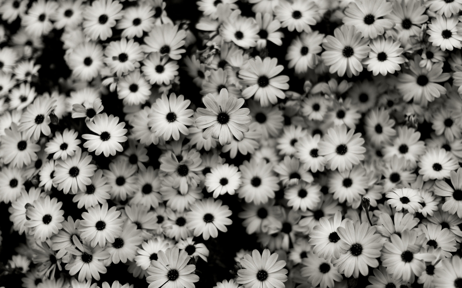 Black White Wallpaper Desktop Background