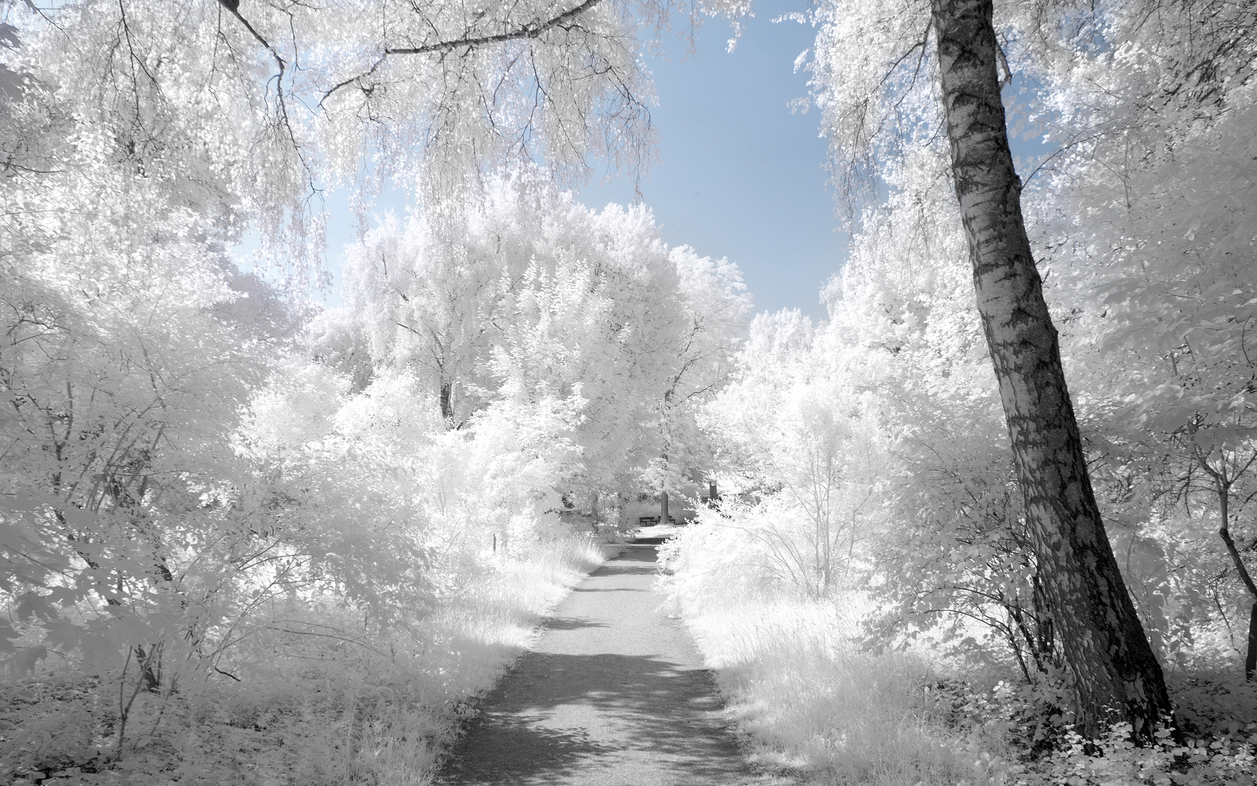 White Wallpapers | Best Wallpapers