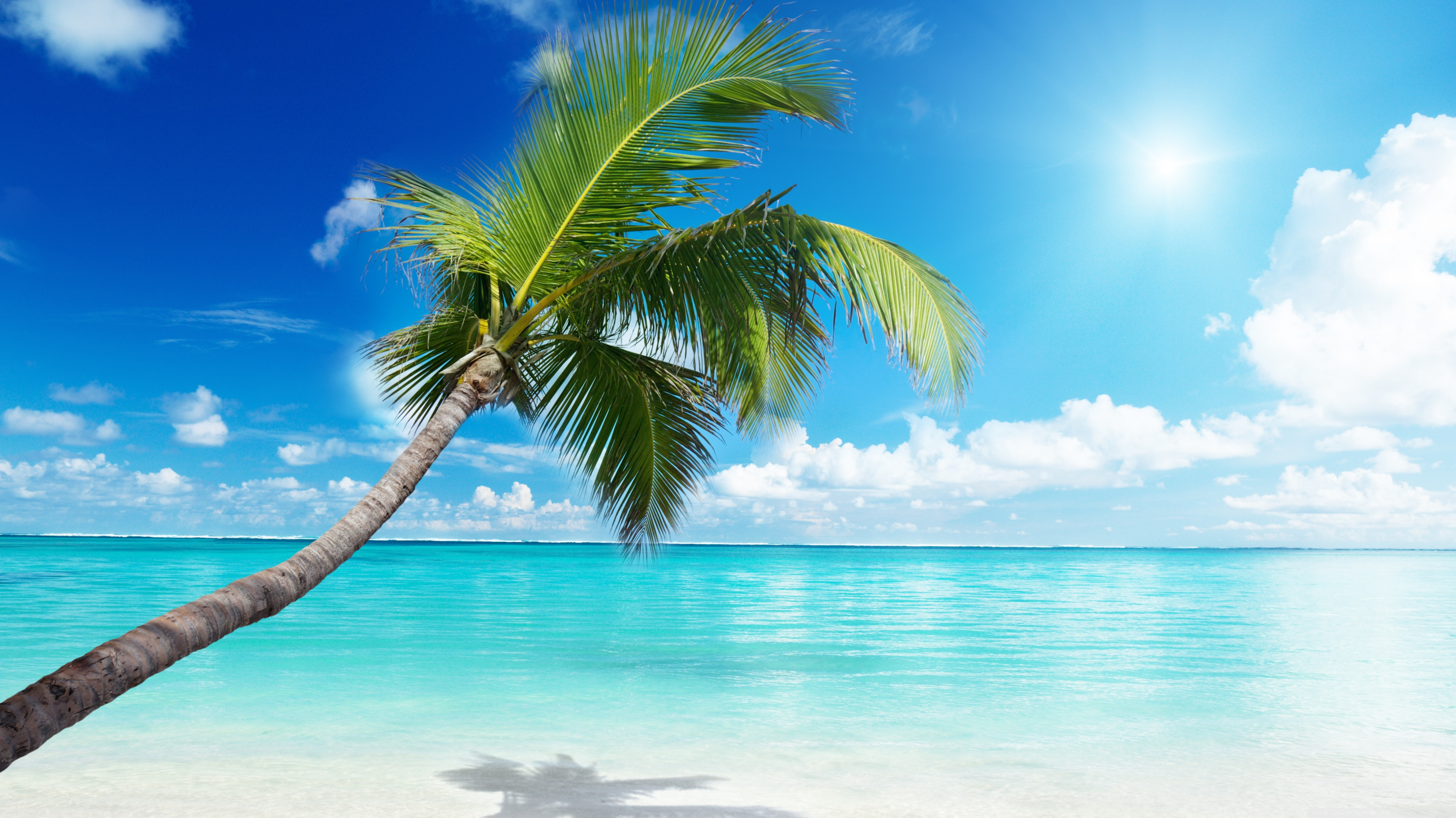 Palm Trees On The Beach: Beach Wallpapers